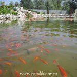 пруд для рыб в спб
